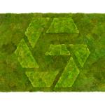 Logo Moosbild
