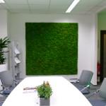 Kugelmoos Wand in Besprechungsraum